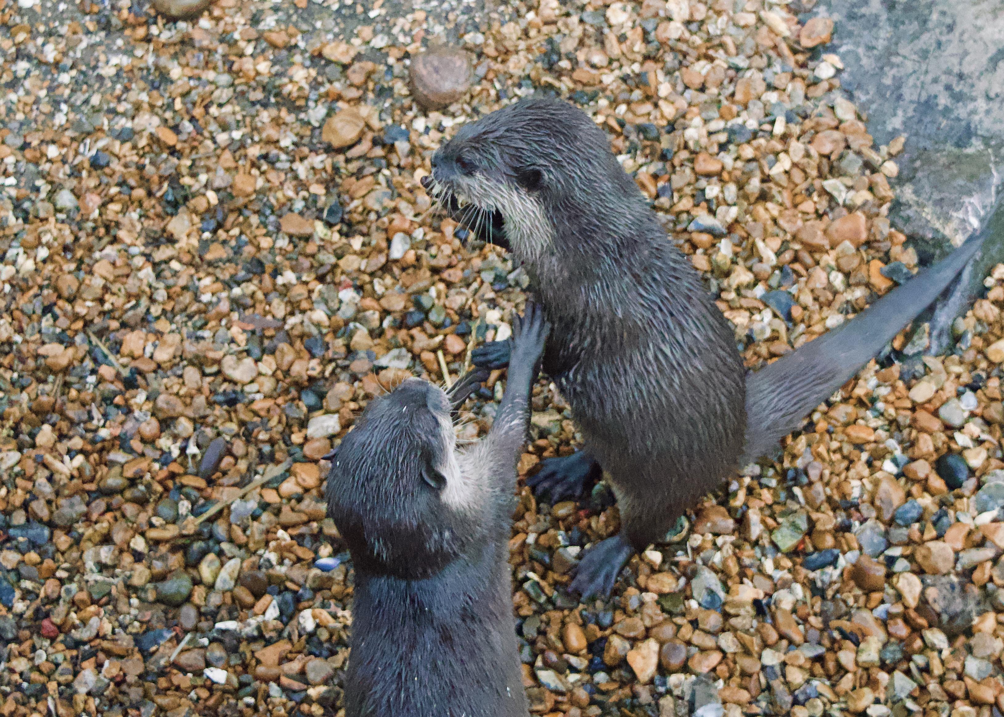chessington world of adventures otters