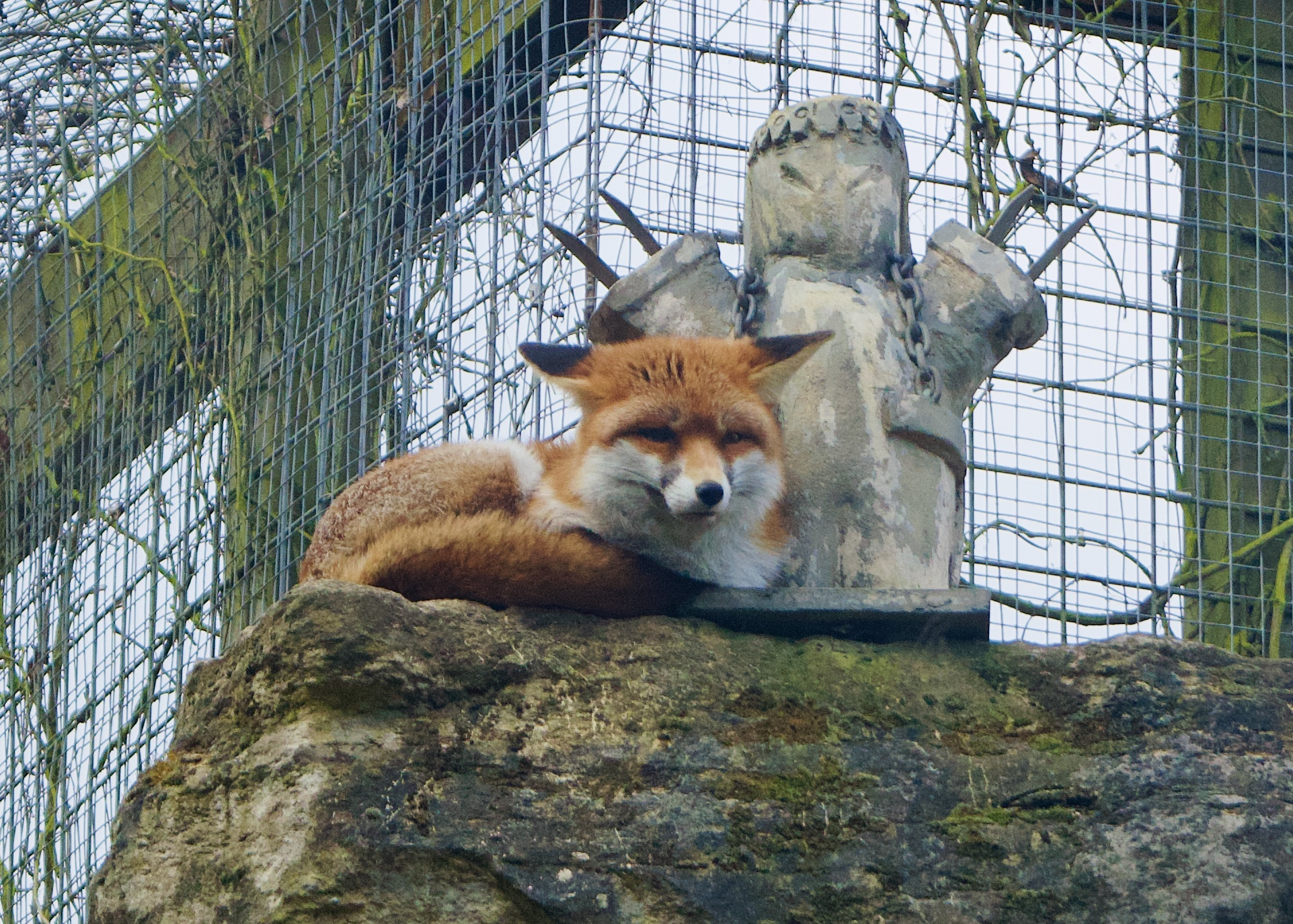 chessington VIP photography experience fox