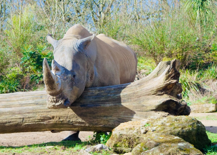 chessington VIP photography experience rhino