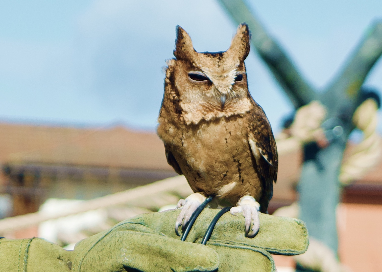 chessington VIP photography experience owl