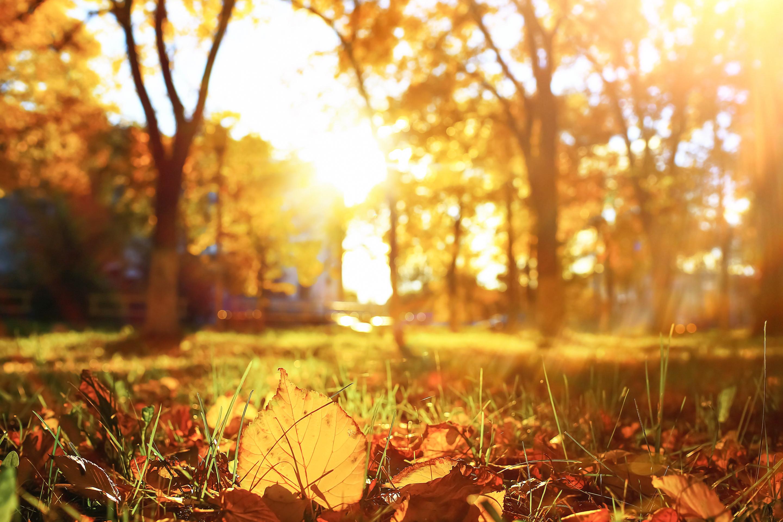 Autumn Top 8 Reasons To Love Halloween Season