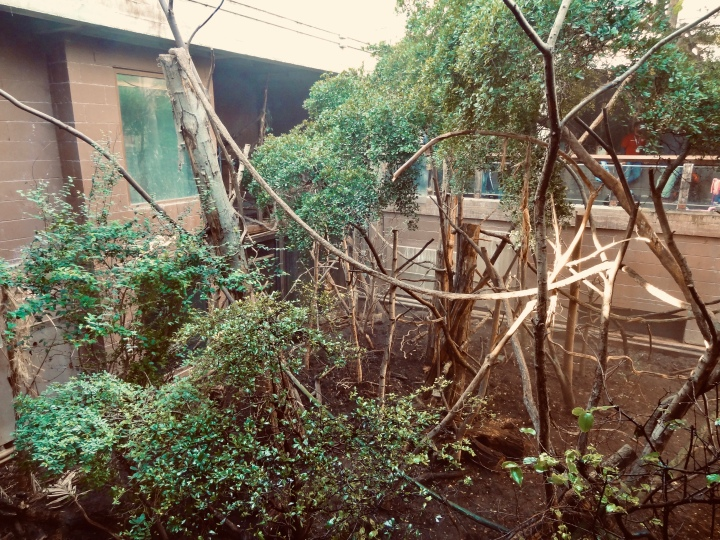 trip to ZSL London Zoo