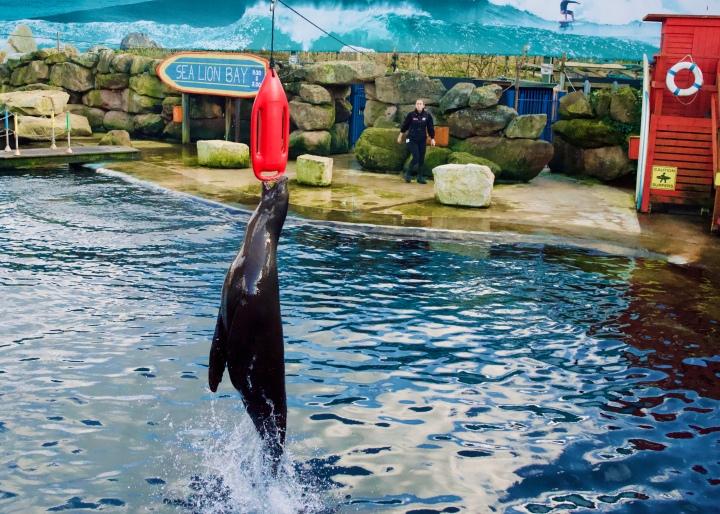 chessington world of adventures sea lions