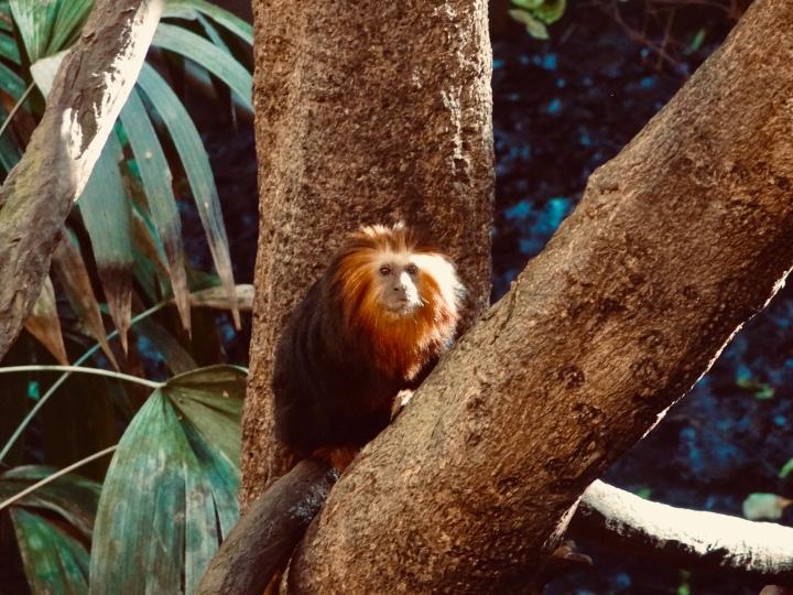 monkey sitting in the tree