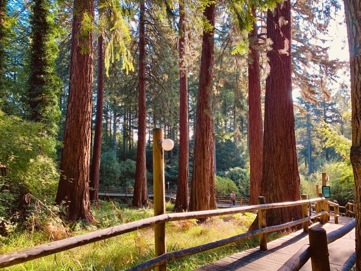 Center Parcs Longleat Forest Staycation – PartFour
